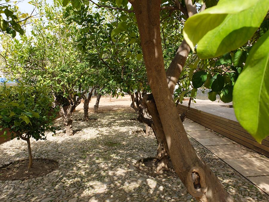 jardín japonés Realejo