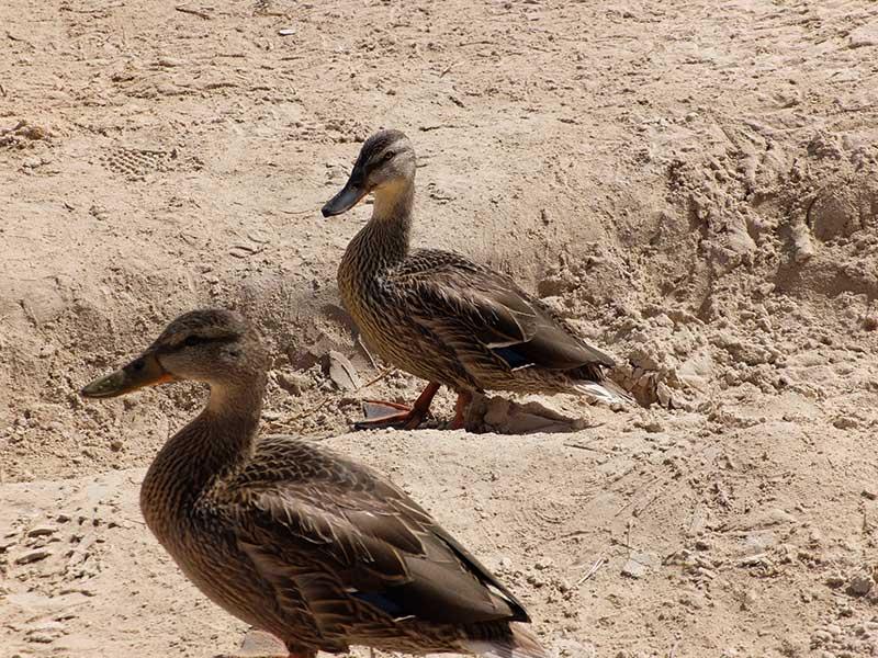 lagunas de Ruidera fauna