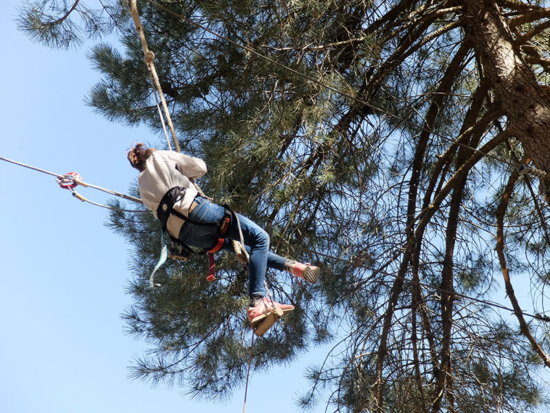 volar entre árboles