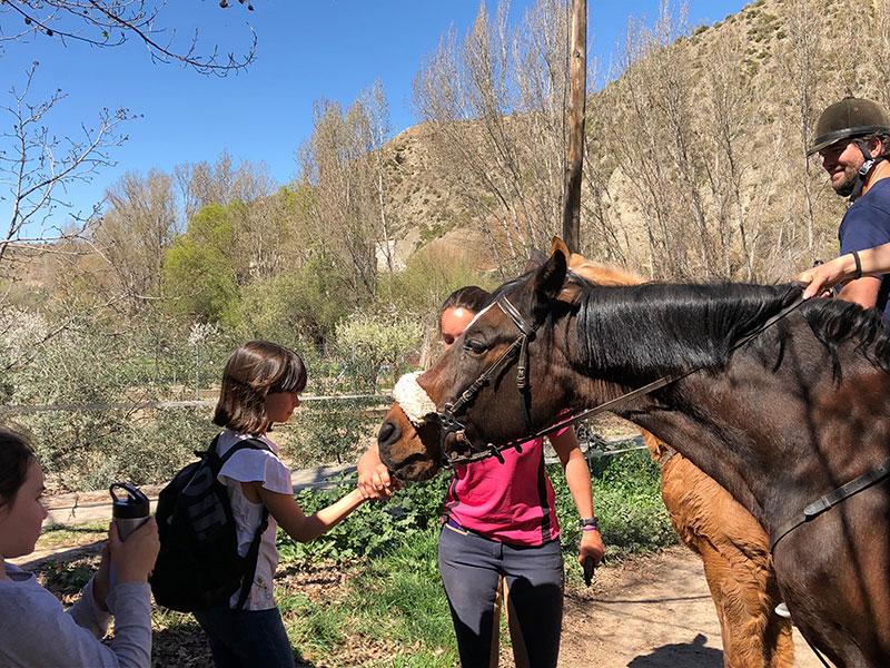 caballos monachil