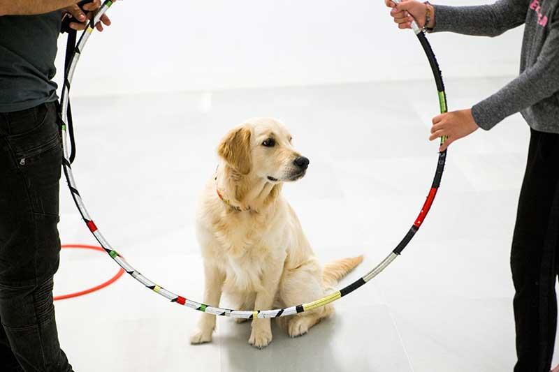 perro-terapeuta