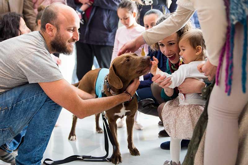 adiestrador perros Granada